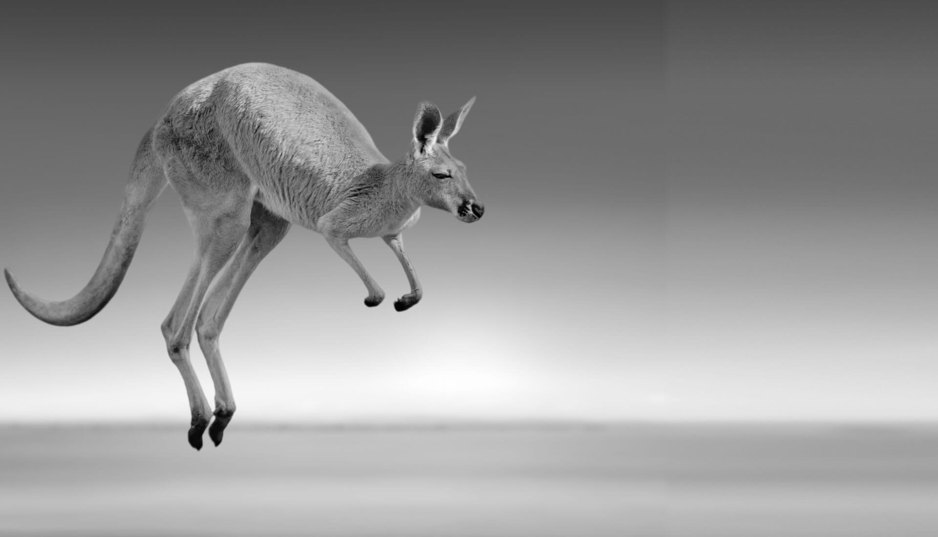 Agency Home Känguru