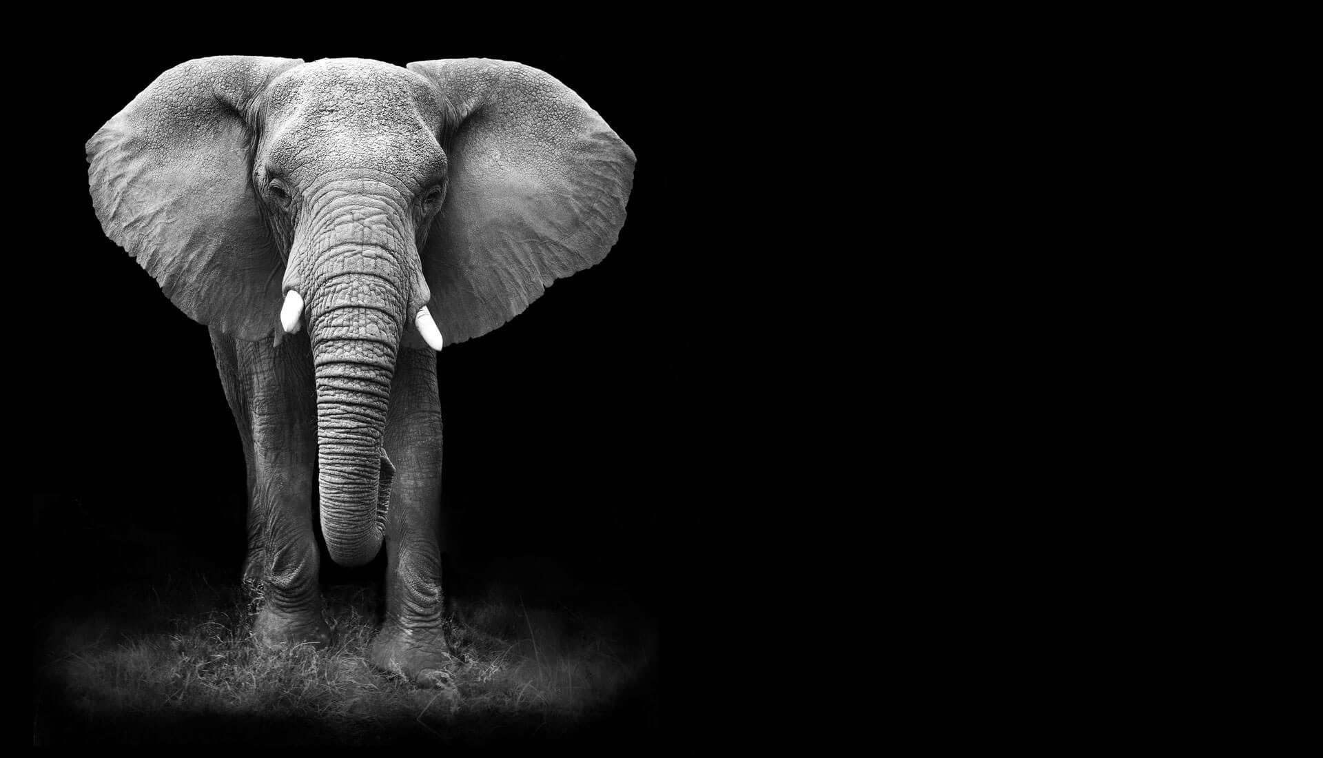 Agency Home Elefant